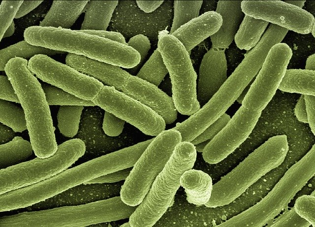 what is e coli