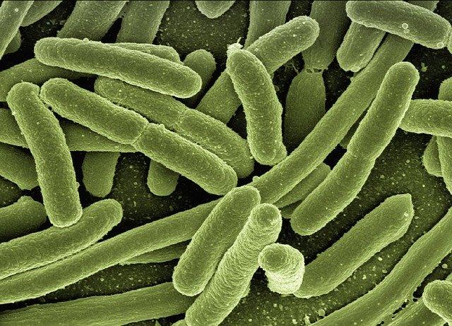 what is e coli
